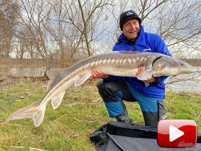 Hideg vízi pontyhorgászat feederrel 24. rész – Óriás tokok februárban