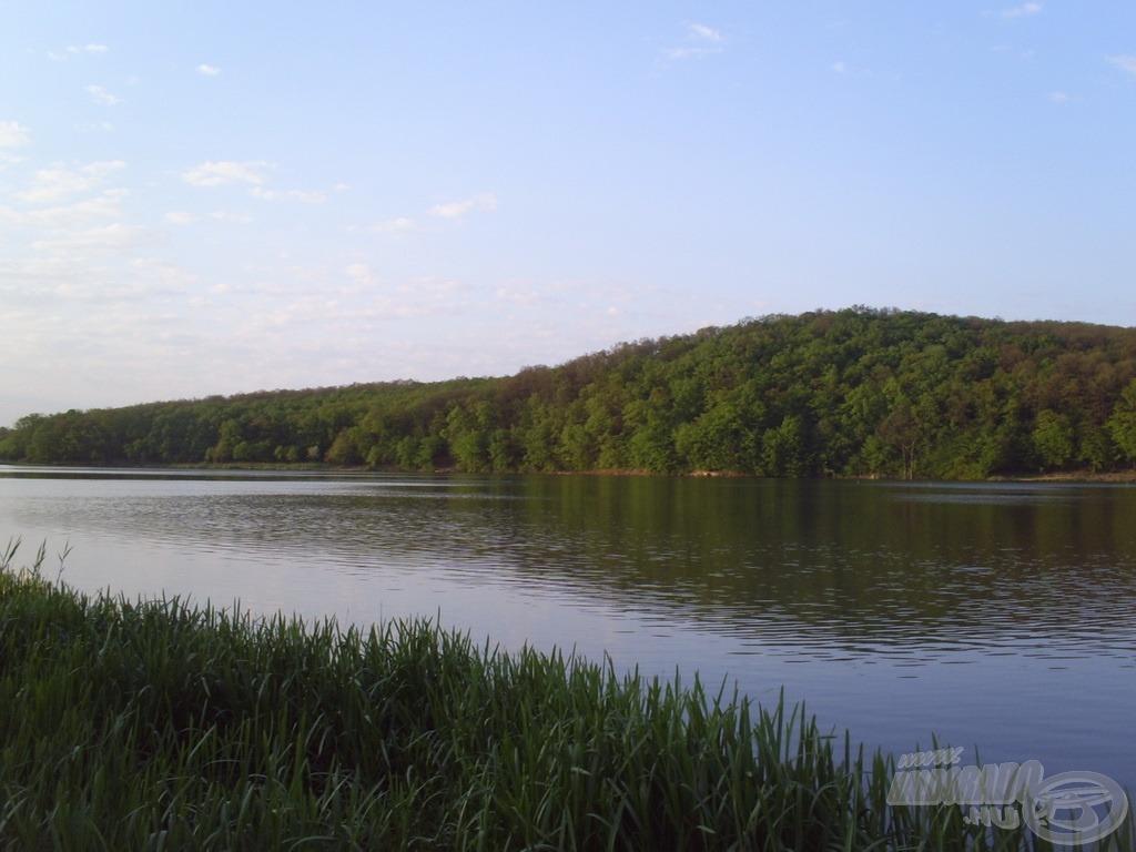 Amikor zöldek a fák, szinte lélegzik, lüktet a táj<br>(forrás: www.carpmind.hu)