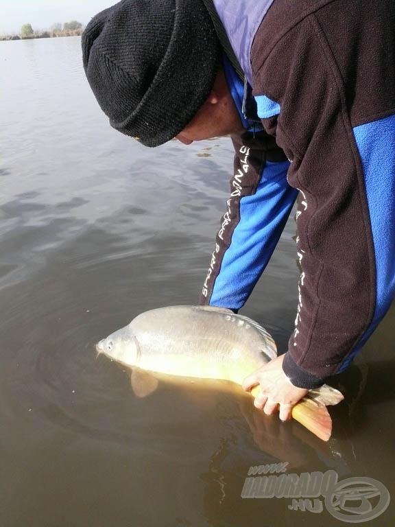 A kifogott halak mindegyikét vissza kell engedni, halat a Nagytóból elvinni tilos