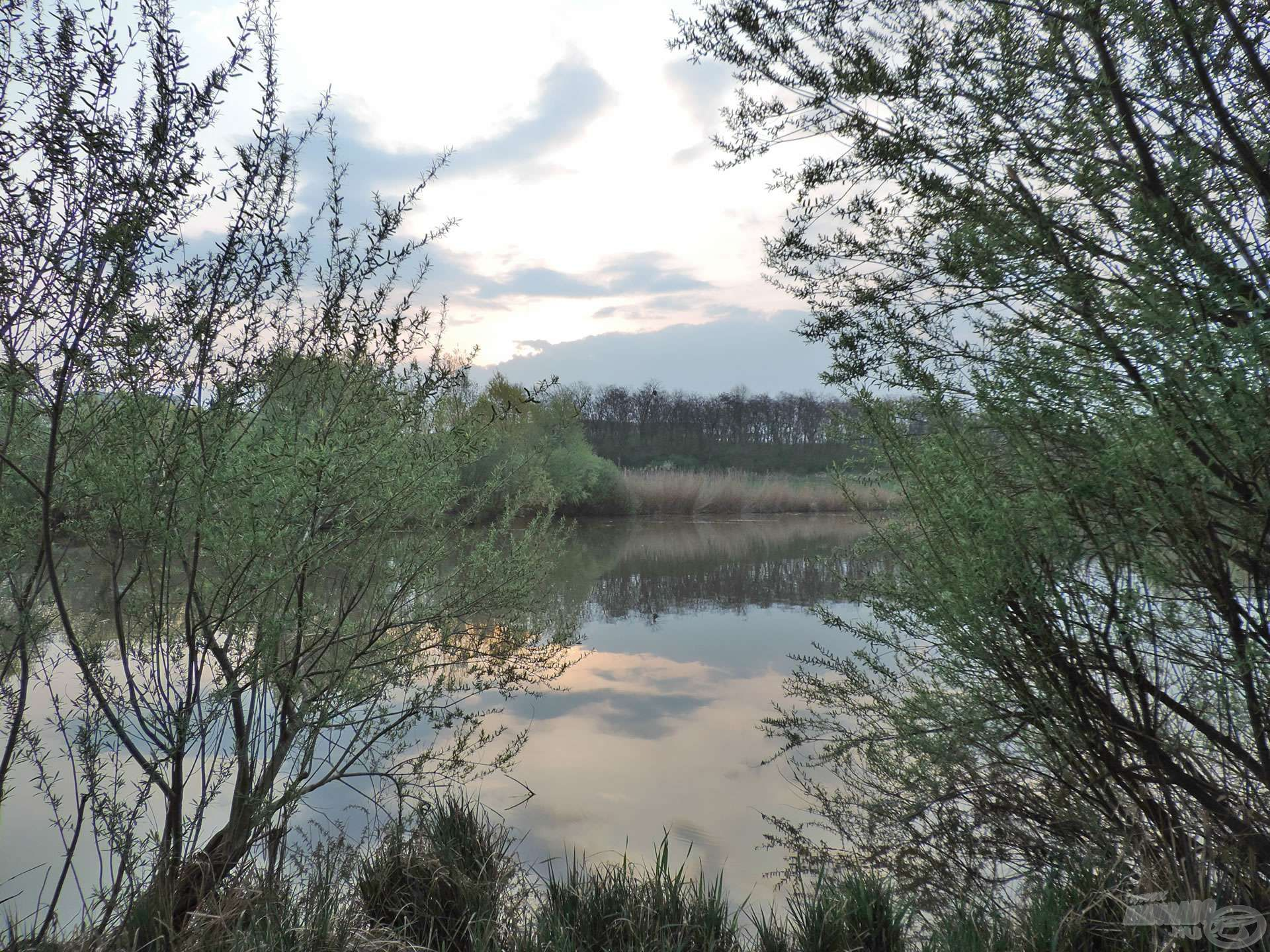 A tó végénél található állásnál vadregényes…