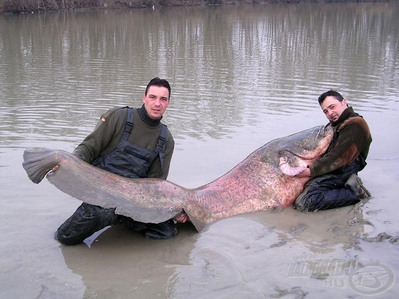 Hivatalosan is világrekord a 135 kilogrammos harcsa!