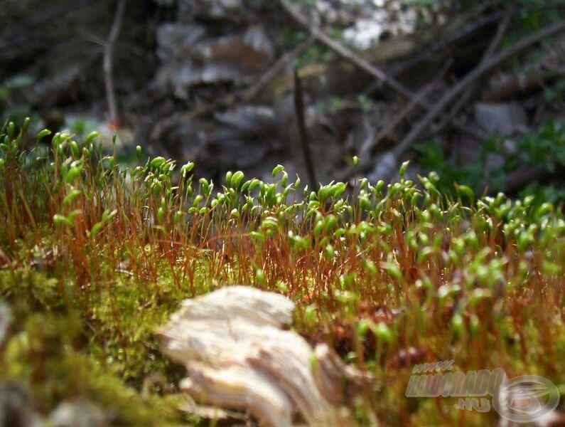 Az erdőben az aljnövényzet újul meg a szemünk láttára