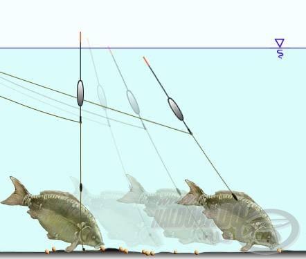 Az egy előrebillenéssel több táplálékot felvevő halak könnyen produkálnak merítős kapást feltolós úszón is