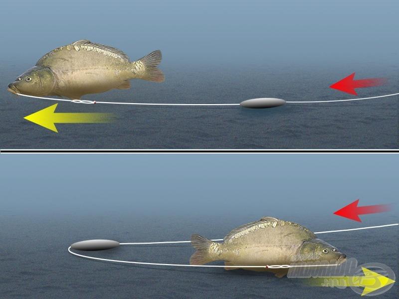 """Ha a csúszó súly elég nagy, és ha a zsinór komolyabb ellenállás nélkül áthúzható rajta, akkor a hal bármilyen irányú elmozdulásakor """"kihúzós"""" kapást tapasztalunk"""