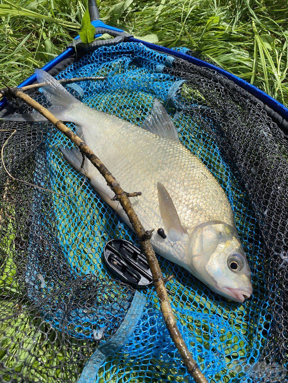 Még a kisebb halak is megpróbálták az akadókat célba venni