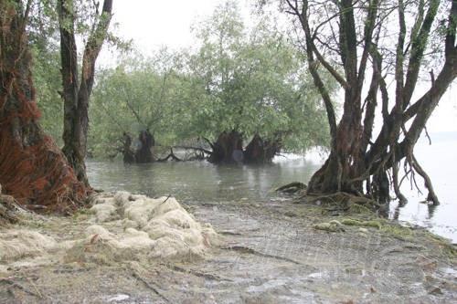 """A szárazra kerülő, megfehéredett """"fű"""" halmai az egész tóra jellemzőek, kevés terület található csak, melyek """"fűmentesek"""" a fenéken"""