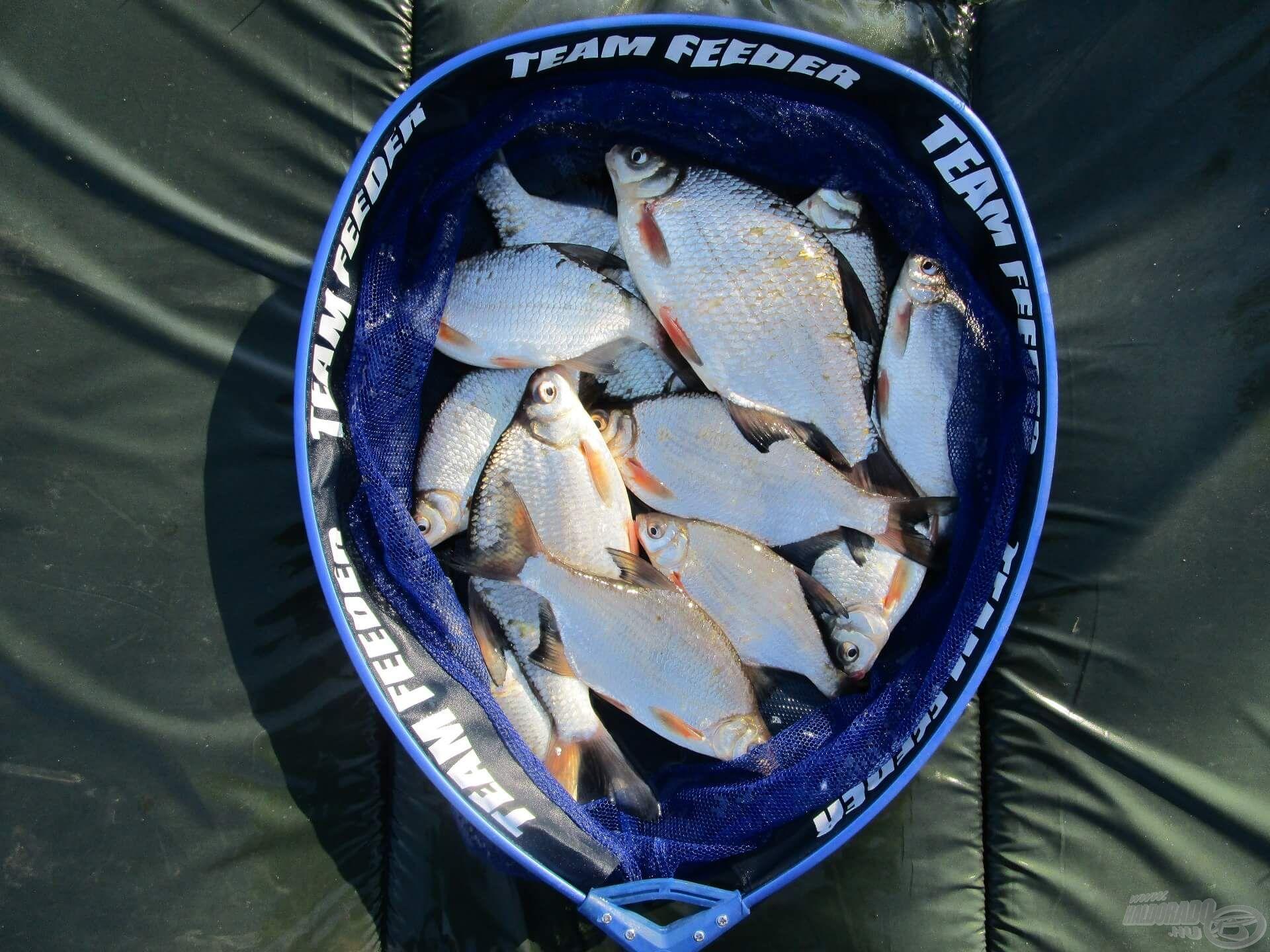 A fogott halak egy része. Csak úgy csillog rajtuk a délutáni napsugár!