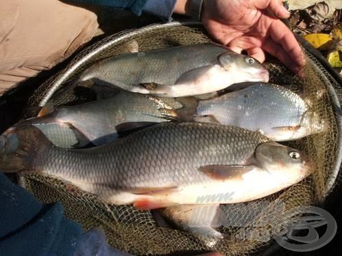 Mindannyian másért szeretünk horgászni. Van aki ezért…