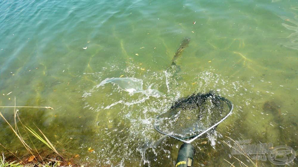 Egy órán keresztül csak ilyen szép halakat fárasztottam…