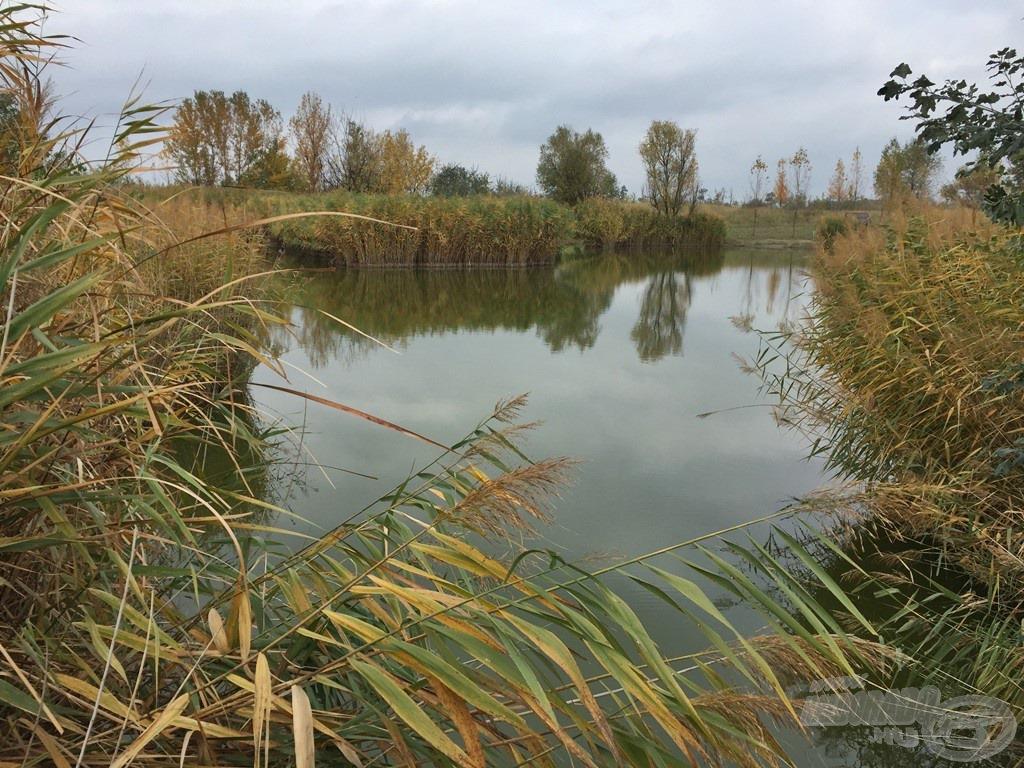 A Forrás-tó volt a következő helyszín, ahol az újdonságok bizonyíthattak. Nagyon szépen gondozott tó, ahol már-már vadregényes környezettel is találkozhatunk