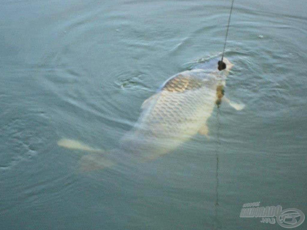 Jó horgásztudás…