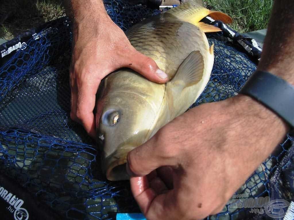 A horog minden esetben jól akadt, nagyon étvágyuknál voltak a halak