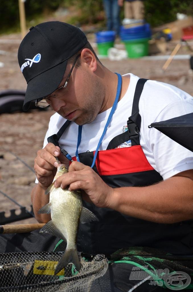 Roppant fontos a kíméletes horogszabadítás, ha a hal elpusztul, még a mérlegelés előtt kiveszik a szákból és nem számít bele a súlya az összfogásba