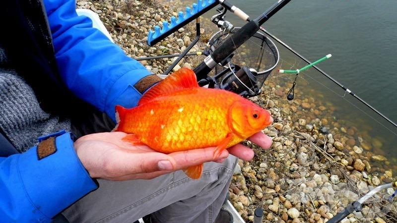 Első tavaszi halam