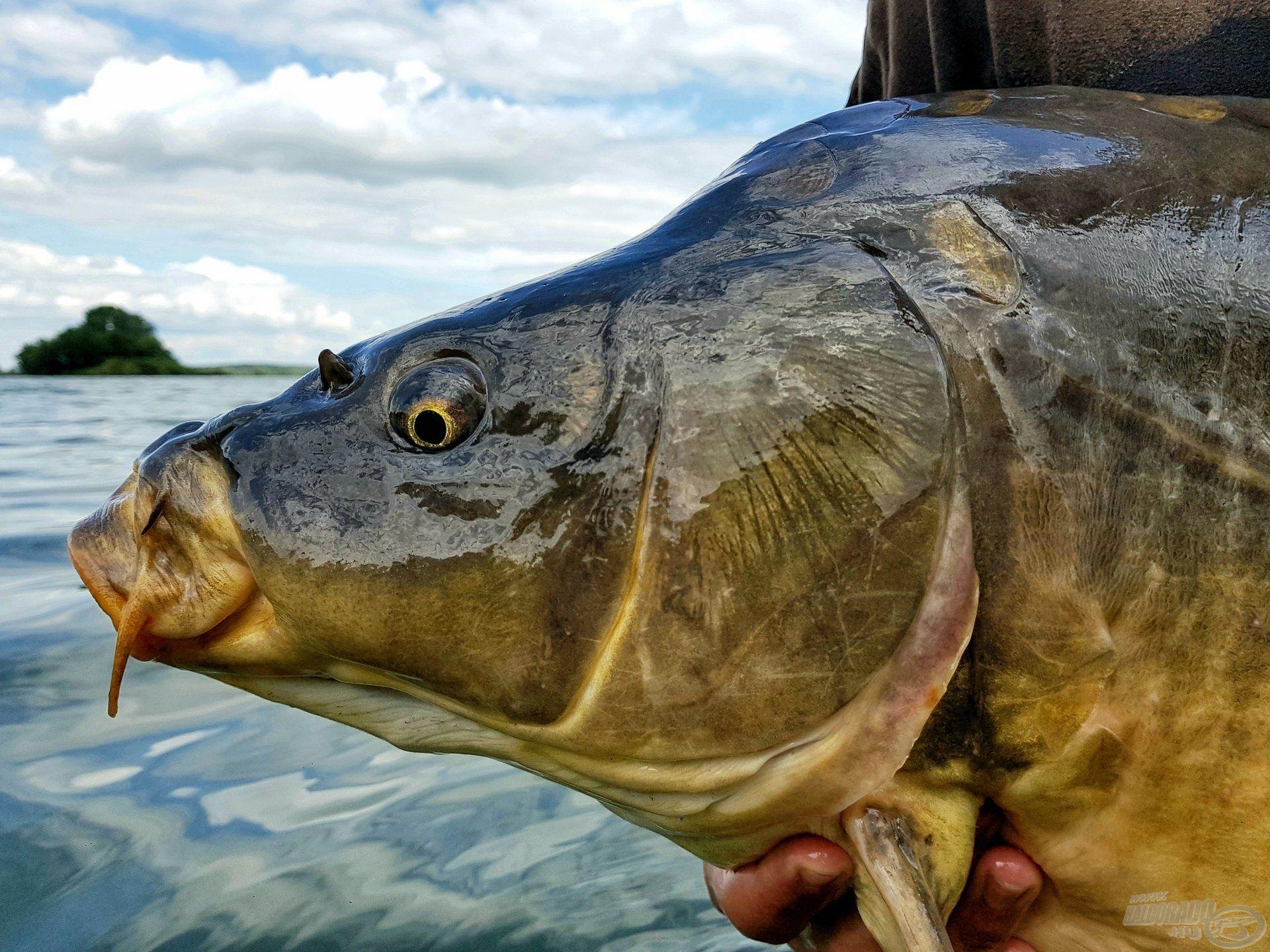 … és mesés színek jellemezték a horgászatunk záró halát