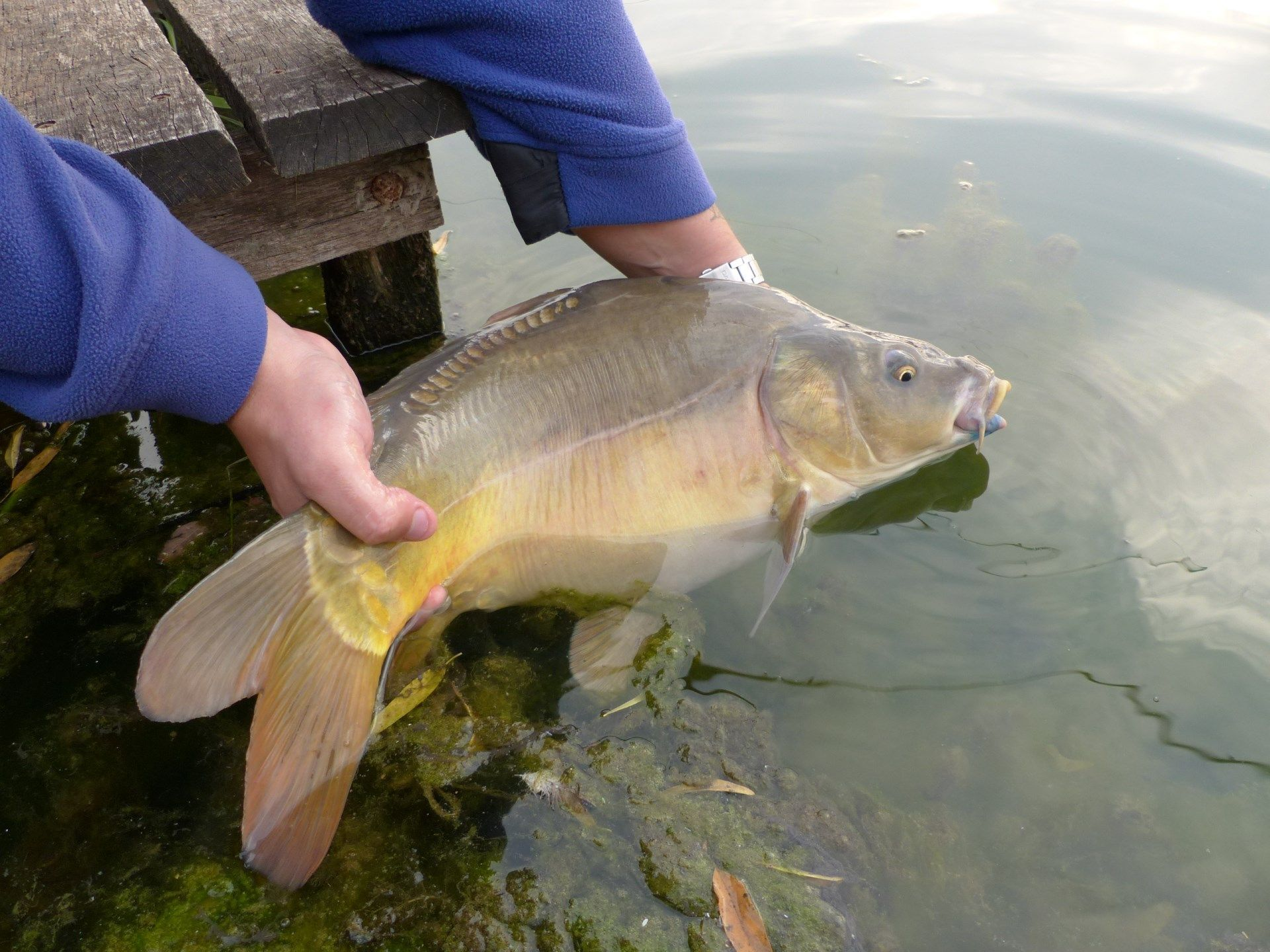 Mérettől függetlenül minden hal visszanyerte a szabadságát. A jövőnk a mi kezünkben van!