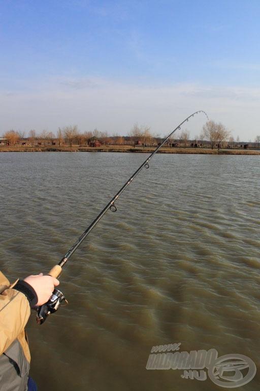 A Pellet Feeder kiváló, rugalmas bot, a halnak nem sok esélye volt