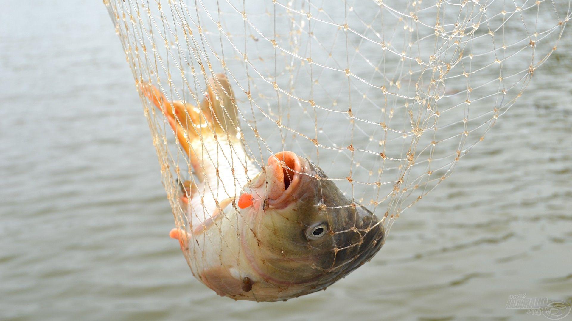 Íme, a nap első hala
