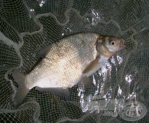 Bárcsak minden hal ekkora lett volna
