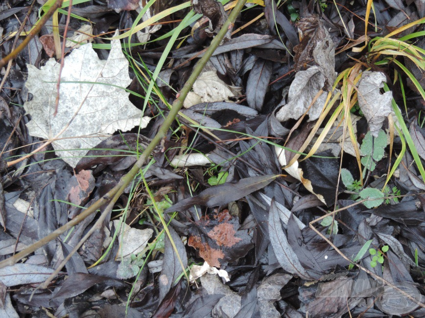 Lehullott levelek a földön