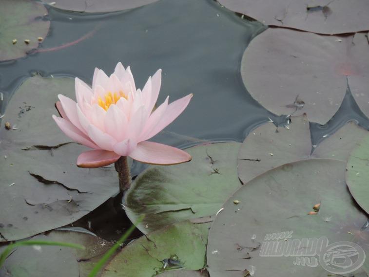… így szebbnél szebb virágaikban gyönyörködhettünk