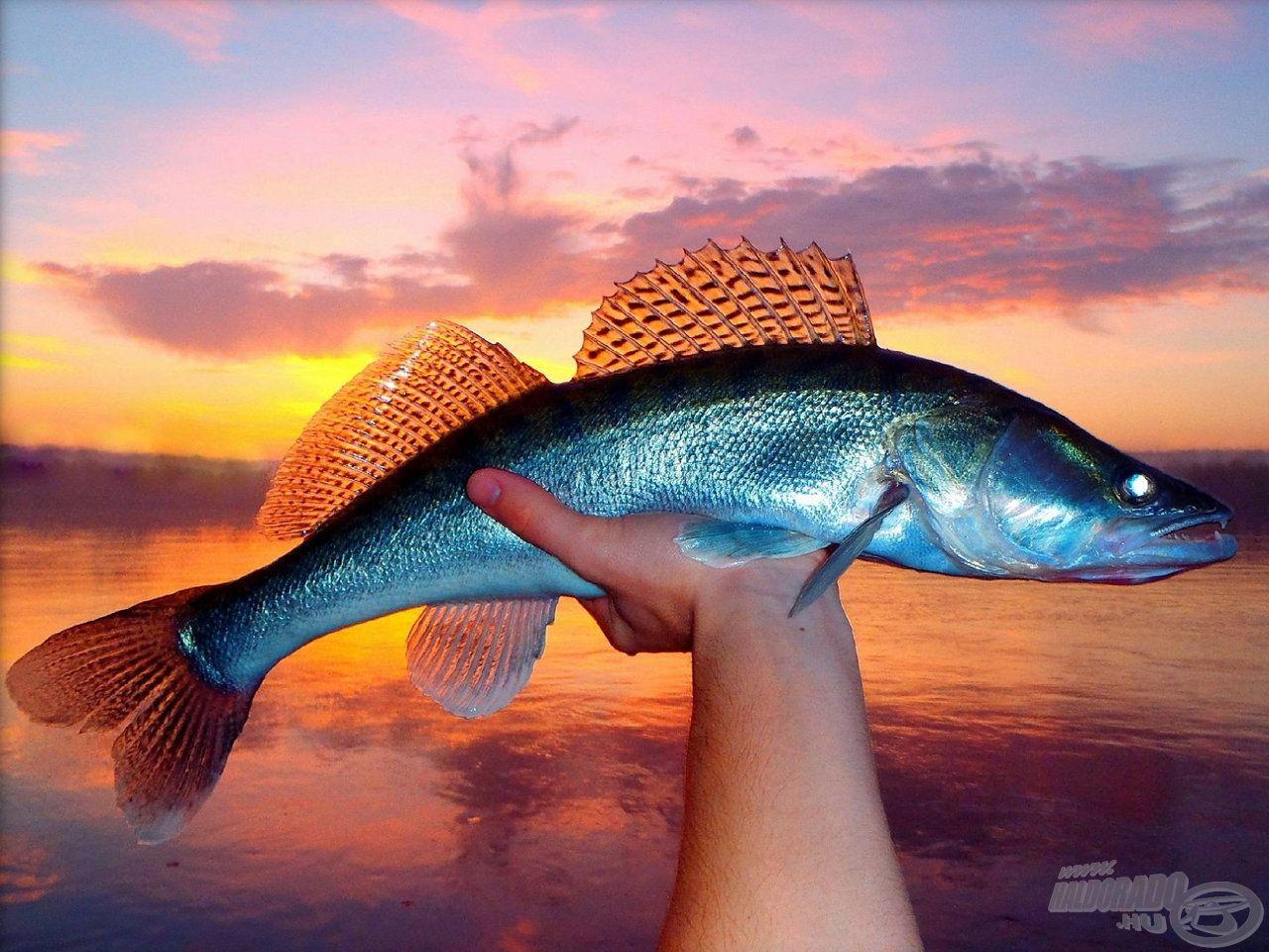 … még az ilyen átlagméretű halak is nagy örömöt tudnak okozni