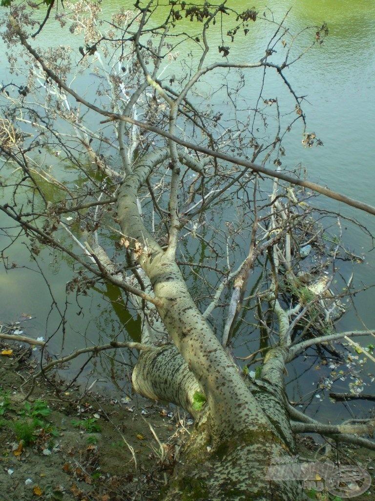A fa szemszögéből