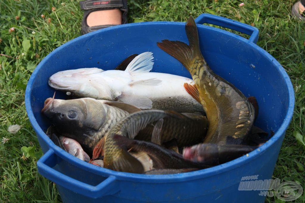 Gyönyörű halak várnak a megmérettetésre