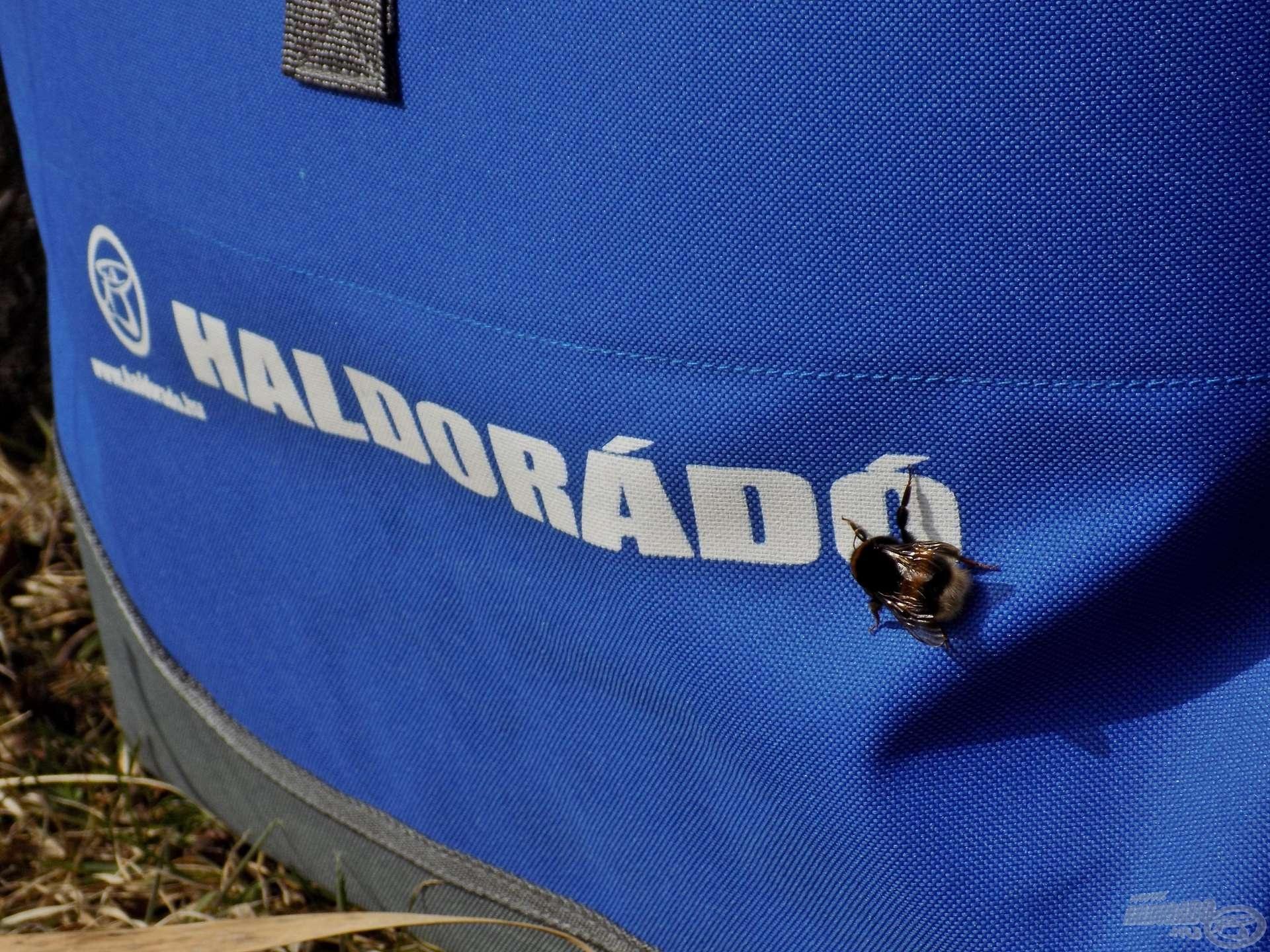 A természet apró felfedezője, ezúttal éppen a szerelékes táskámat vette alaposan szemügyre