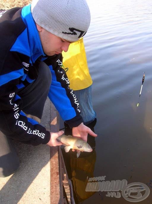 A compó az egész Ráckevei Duna-ágon védett hal, ezért gyorsan vissza is engedtem
