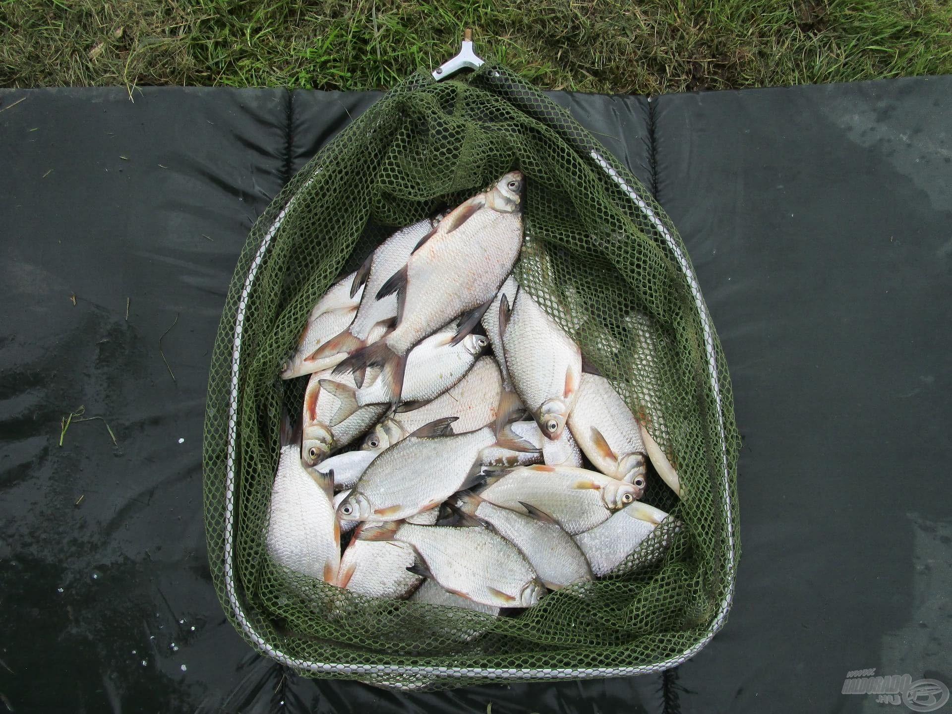 A TOP1 Bream szintén adja a halat rendesen. Ezek a vad keszegek sem tudtak neki ellenállni