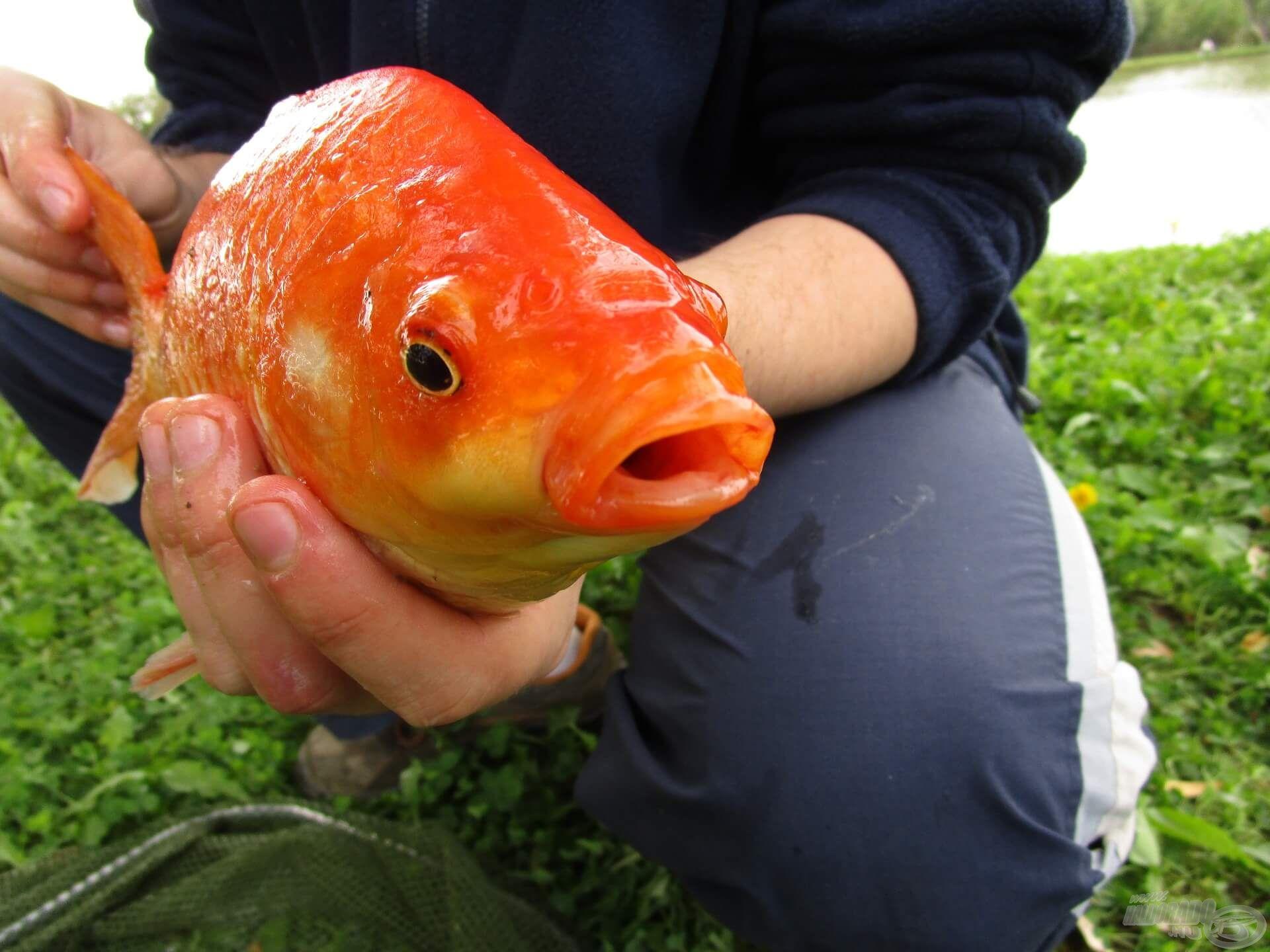 Sosem lehet tudni, hogy mi akad horogra, ezért is olyan jó a horgászat!