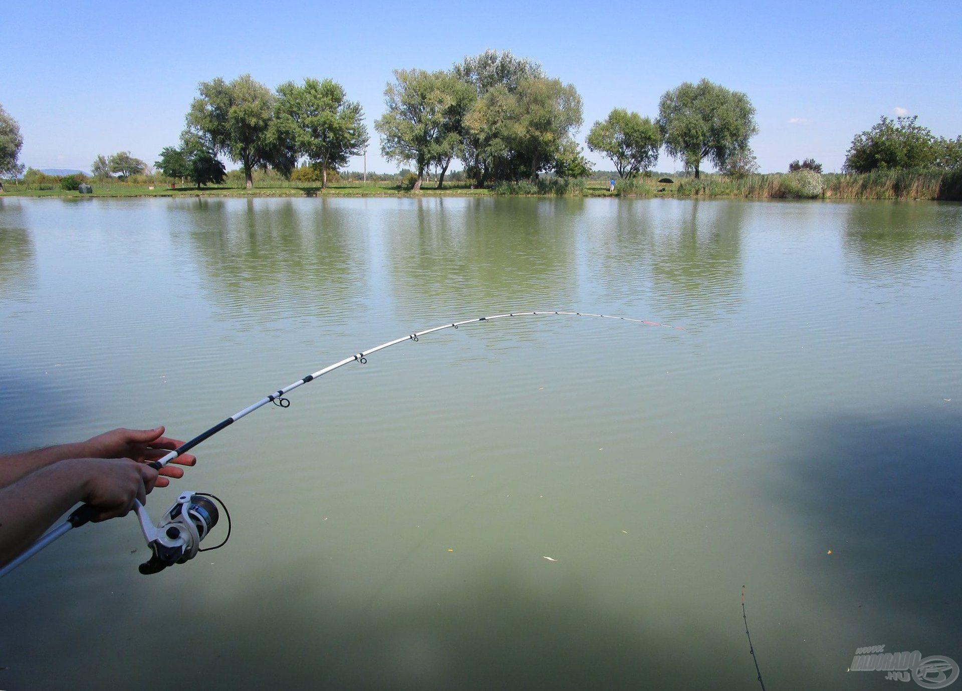 Akcióban a nagy kedvencem, a Pro Method Feeder bot. Ezt a botot a legtöbb horgászatra magammal viszem
