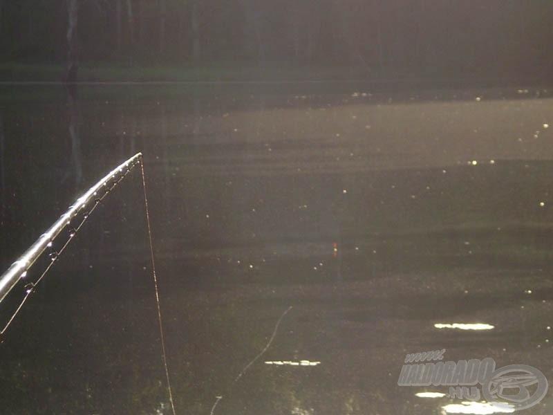 Az úszó antennahegyre súlyozva. A feltolós kapások így nagyon látványosak voltak