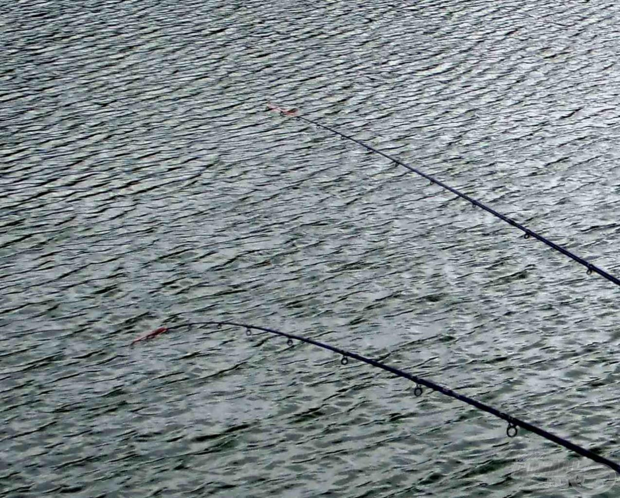 Ilyen botállásnál könnyebben tudja a hal az első kirohanásához szükséges zsinórt lekérni az orsóról. Ha most a bot a szokásos módon lett volna lerakva, valószínűleg a vízben kötött volna ki!