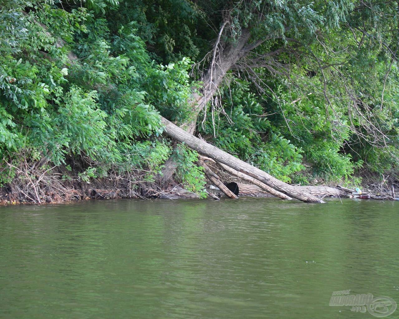 Külön örülünk, ha természetes vadvízi beszámolókat kapunk