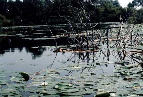 A nyáron fogósnak bizonyuló helyek a léki horgászatok során is eredményesek lehetnek