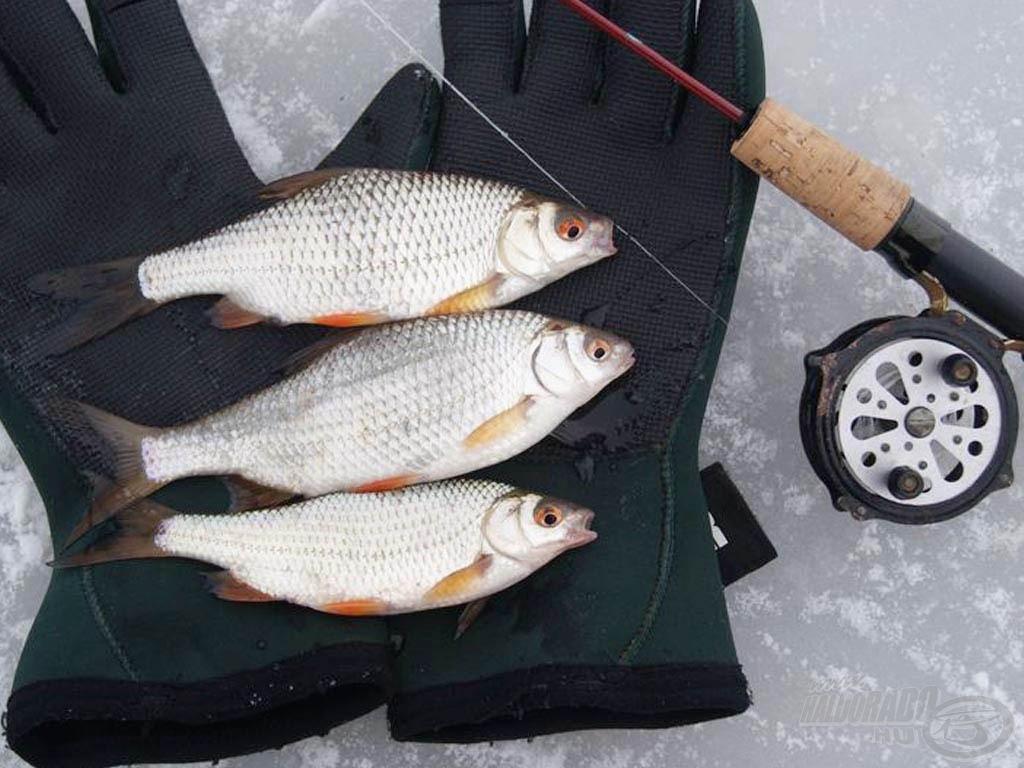 Ilyen szép halak is horogra kerültek