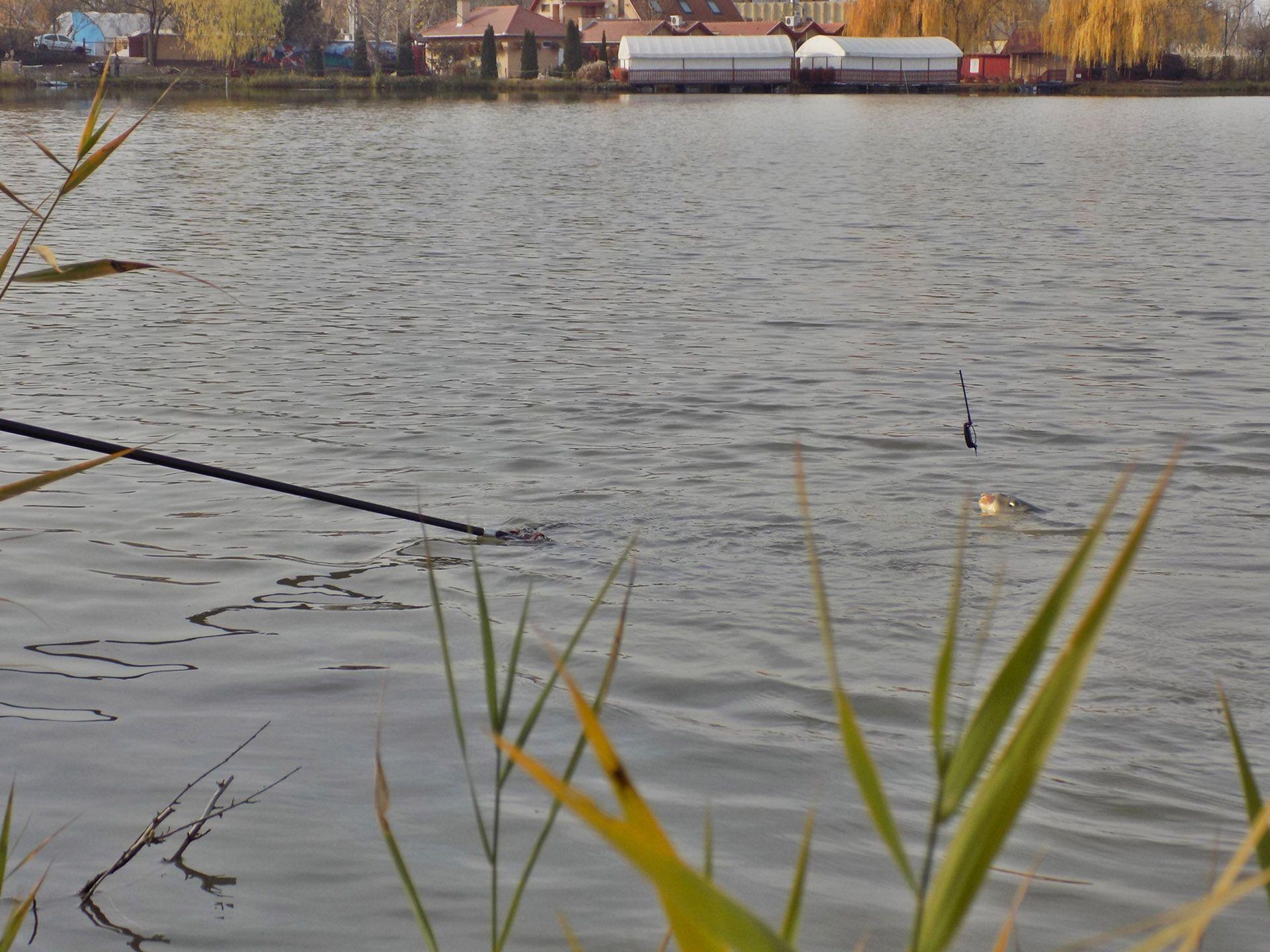 … gyorsan a szák közelébe terelhetőek! Mindezt teszik úgy, hogy komoly élményekkel halmozzák el a horgászt!
