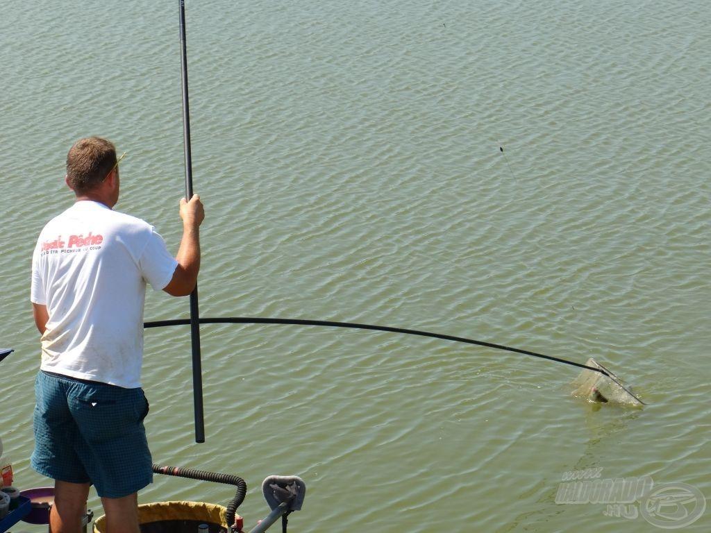 Erre a halra nem kellett keresztet venni, …