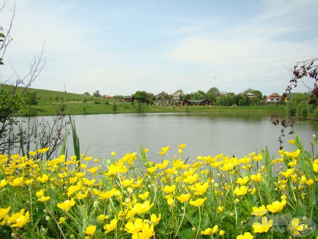 Tavaszi virágkeretben a Rekord-tó is