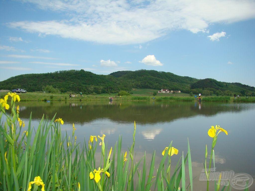 A gát a mocsári nőszirmokkal díszített VI. tó felől