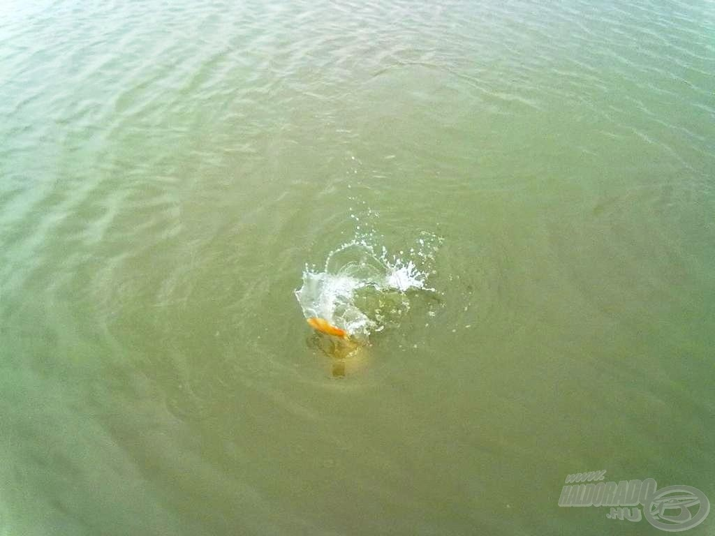 A halak a hideg ellenére jól küzdöttek