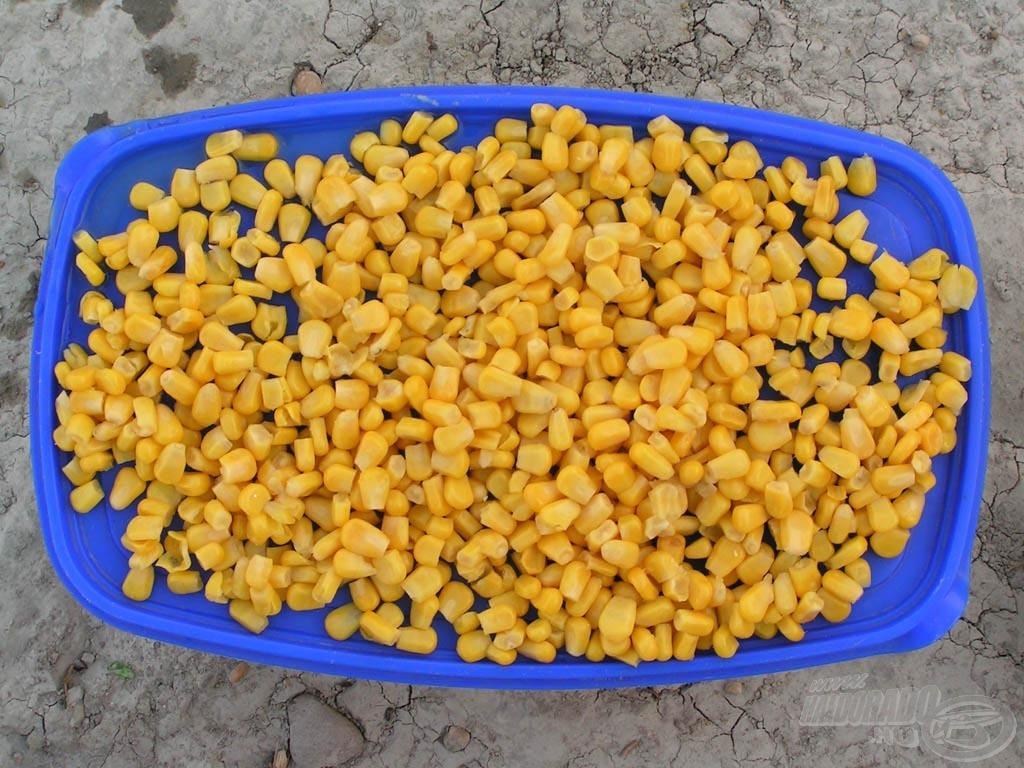 A csemegekukoricát jobban szereti a márna, az öreg sporik közül sokan csaliként is igen eredményesen használják