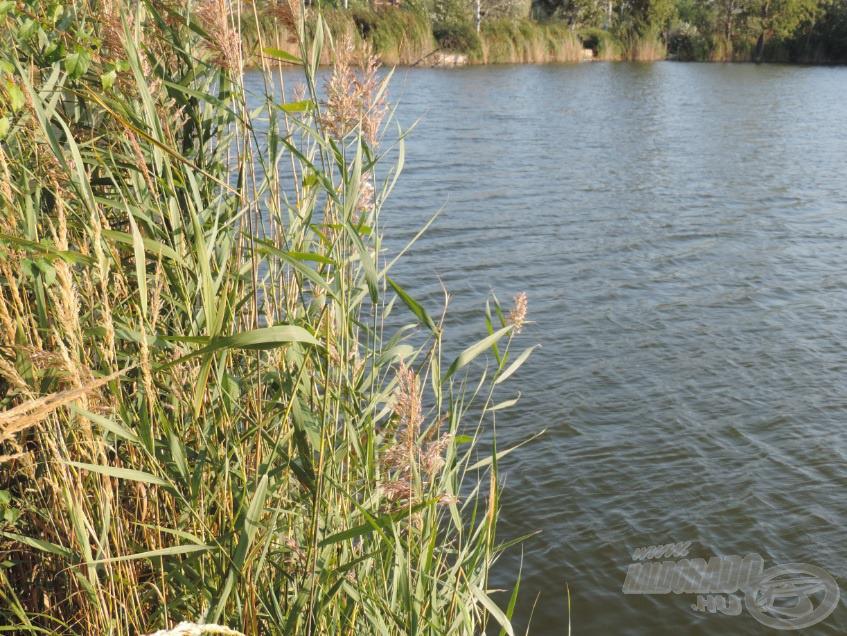 A nádas is az ősz színeiben kezdett pompázni