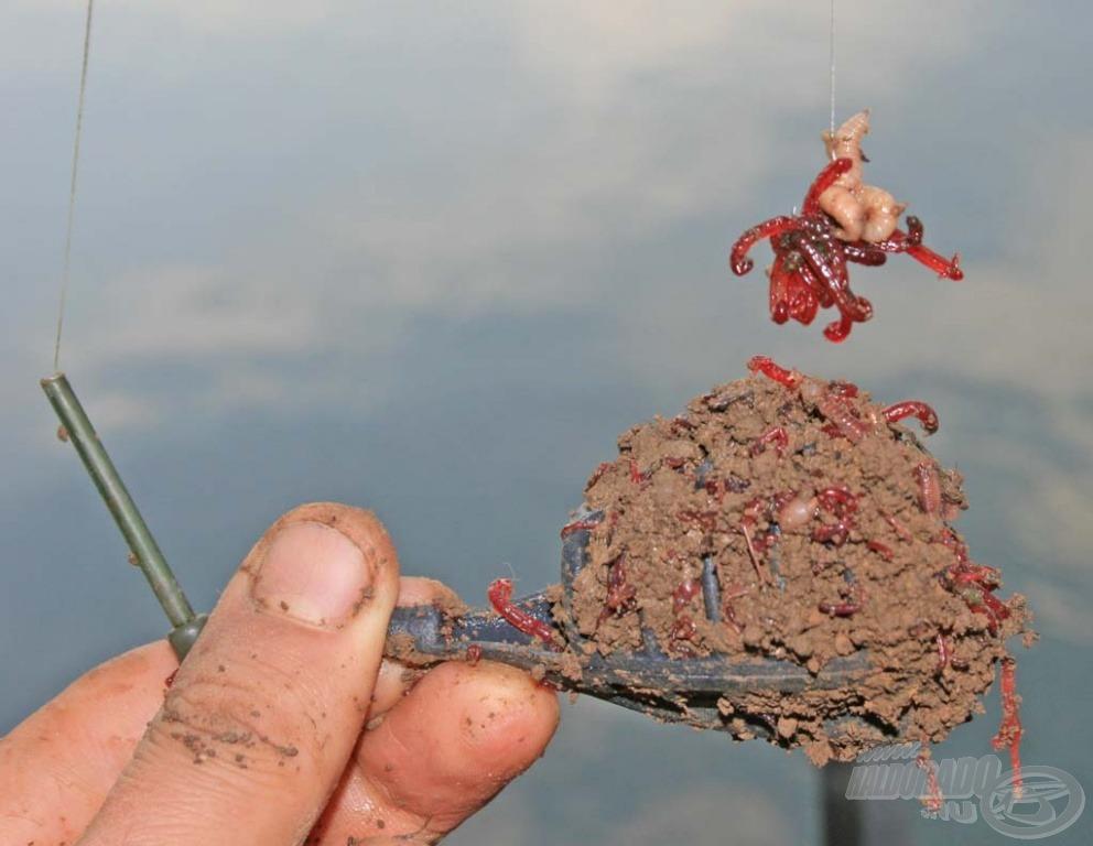 Ha a kosárba darabolt gilisztával fűszerezett földes szúnyog került, a horogra pedig csonti + szúnyoglárva…