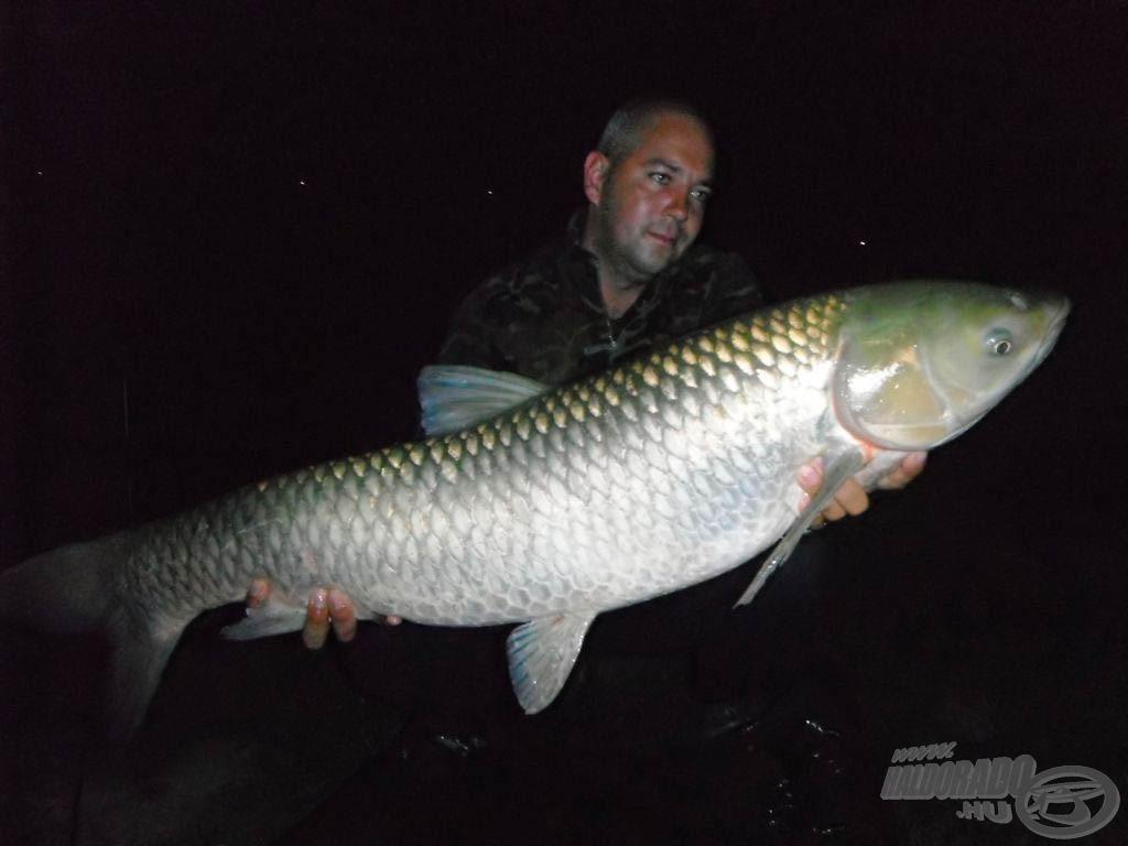 12, 80 kg-os amur