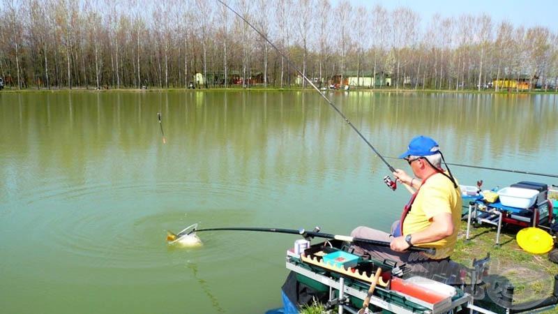 A benti etetést hamar megtalálták a halak