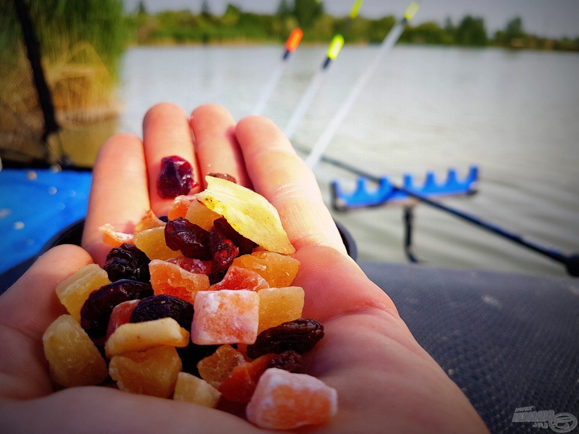 Szokatlan csalétek az aszalt és a kandírozott gyümölcs, régóta foglalkoztatott, vajon miképpen reagálnának rá a halak, így tettem egy próbát
