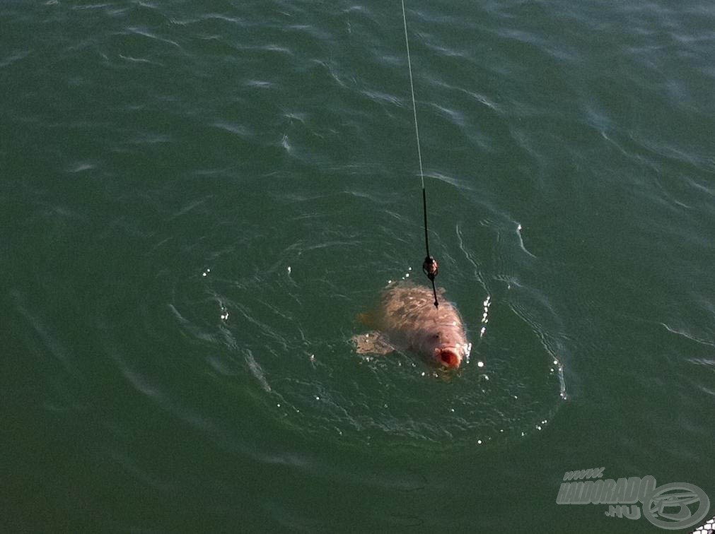 Ezzel a szerelékkel egy halat sem vesztettem aznap